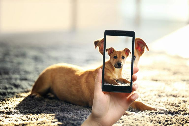 10 nasvetov za popolne fotografije z vašim psom