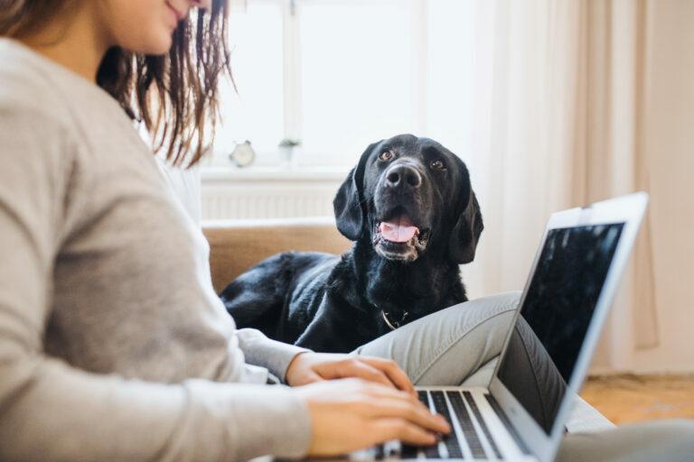 Delo od doma s psom