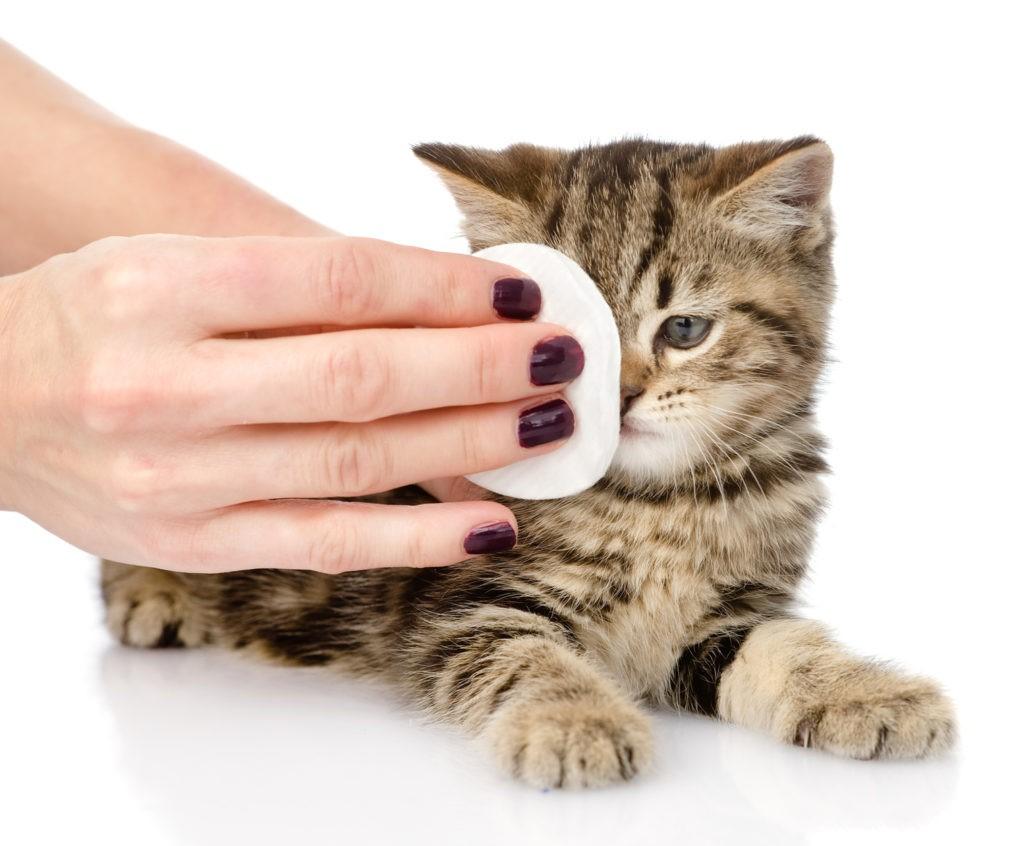 Čiščenje oči in ušes pri mačkah
