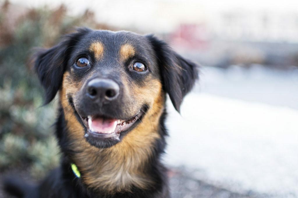 srečen pes