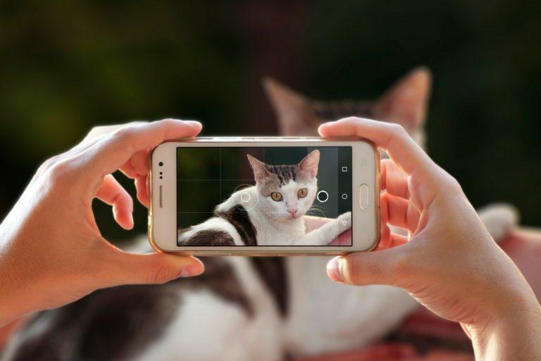 10 nasvetov za popolne fotografije z mačko