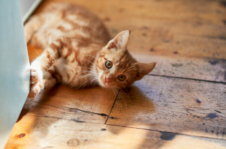 Laser za mačke