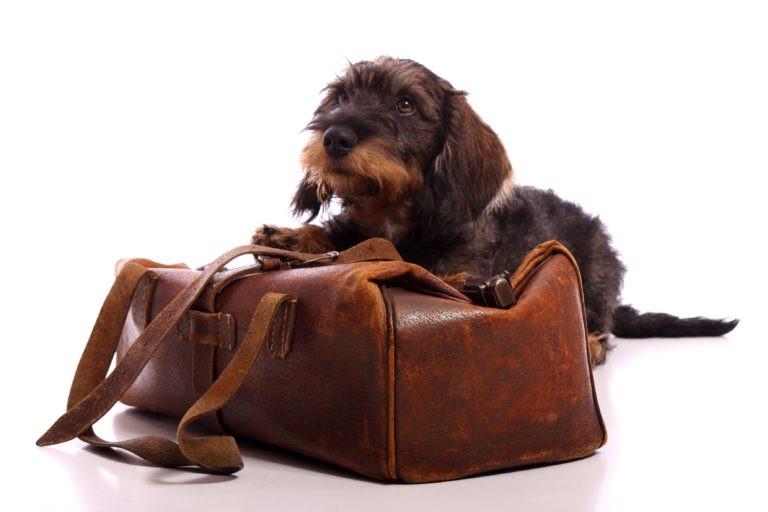 potovalna slabost pri psih