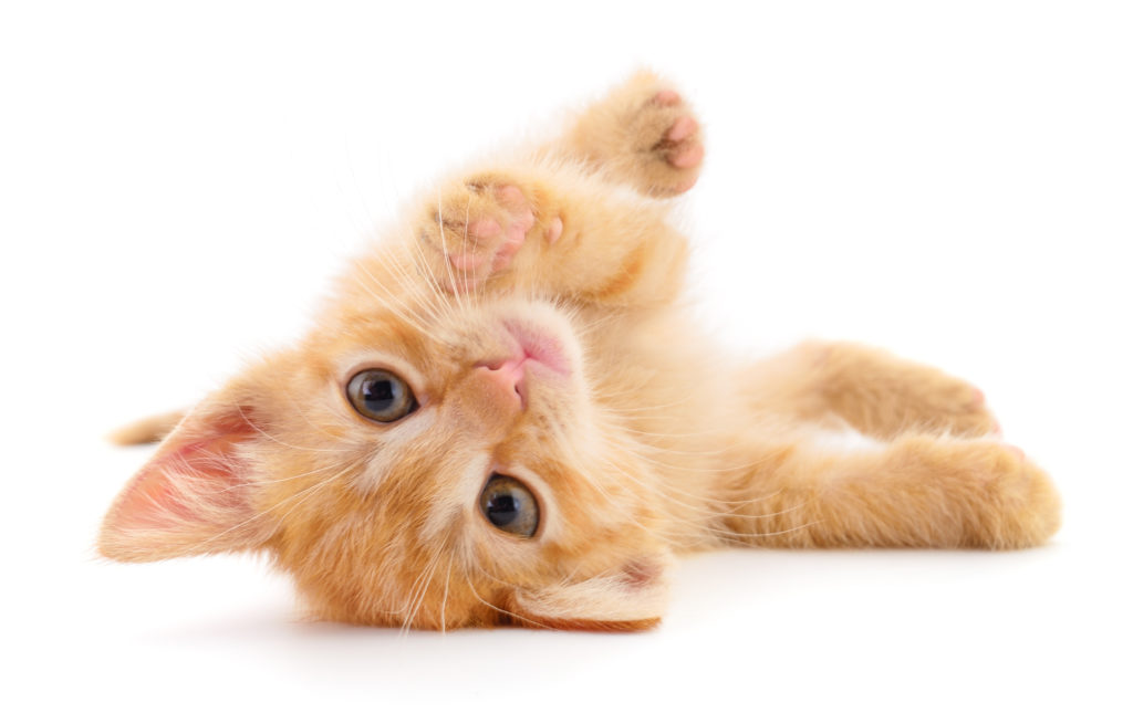 Hrana za mačje mladiče