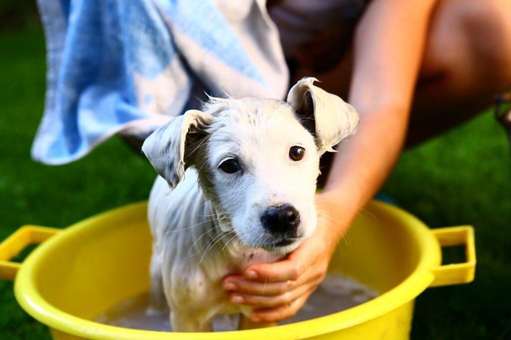 kopanje pasjih mladičev