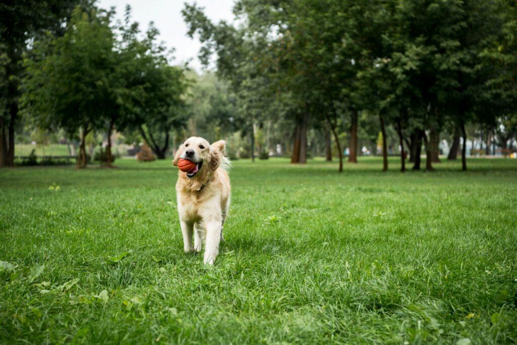Življenje psov po koronavirusu