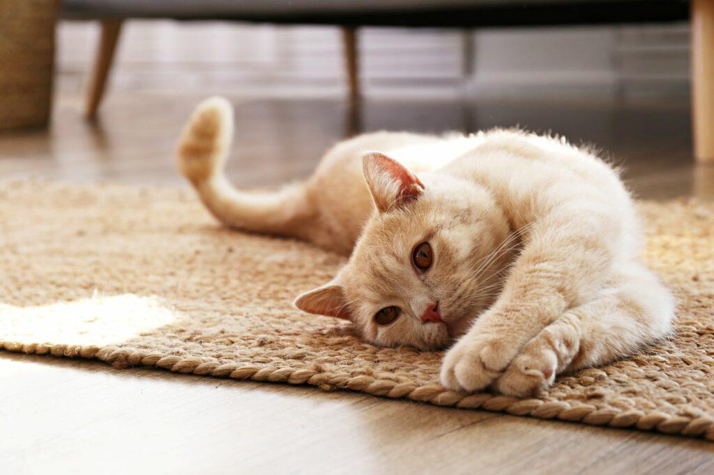 Vsakdanje življenje mačk po koronavirusu