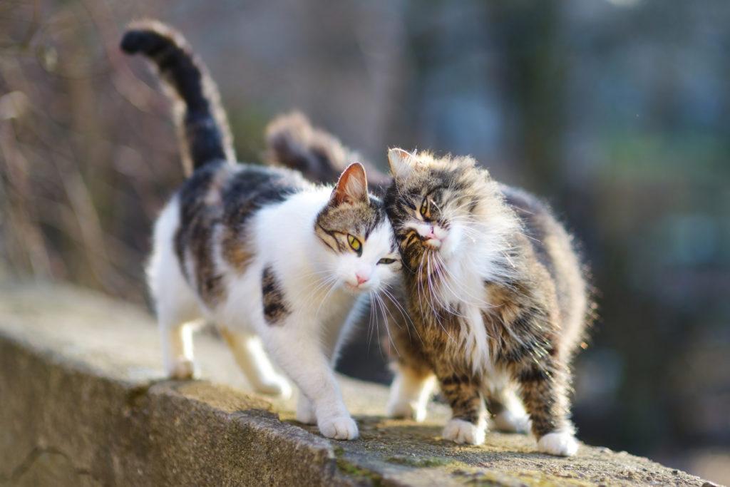 Naj mačko steriliziram ali kastriram?