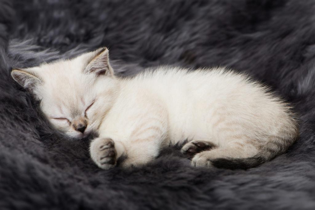 Driska pri mačjih mladičih