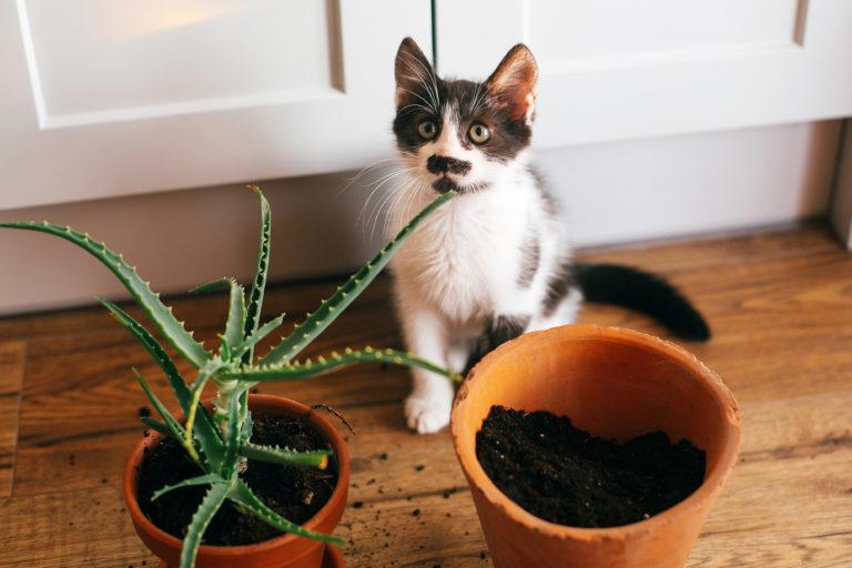 Mačka lula v rože