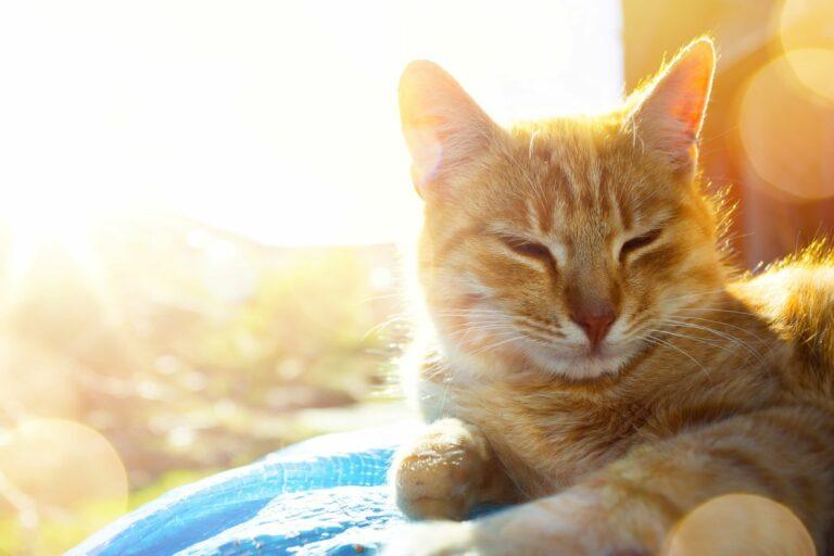 5 nasvetov kako pomagati mački v vročini