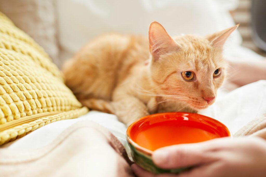 Dehidracija pri mačkah