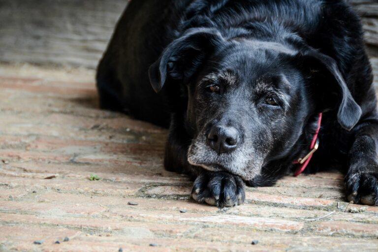 Starost psov