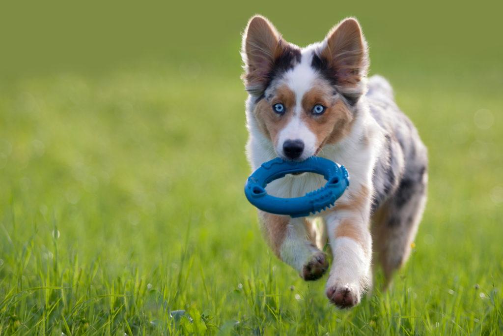 Igra s pasjim mladičkom