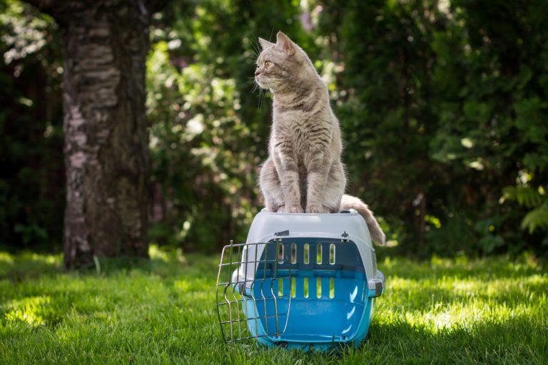 9 nasvetov za popolni boks za mačko