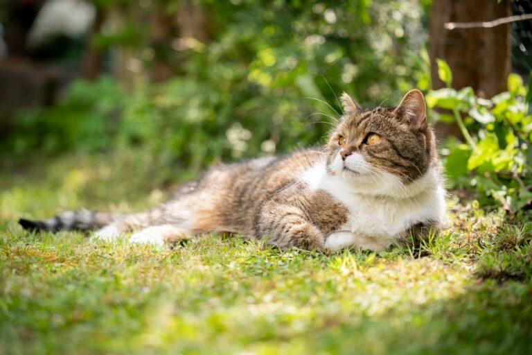 Vročinska kap pri mačkah