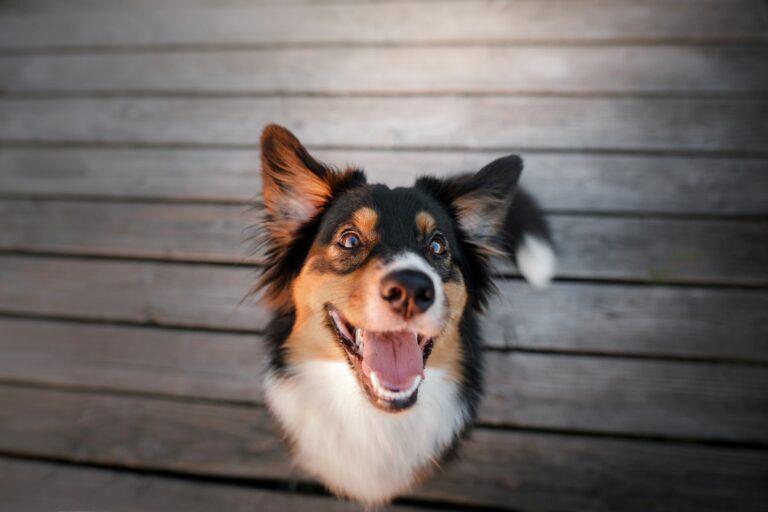 slab zadah pri psih