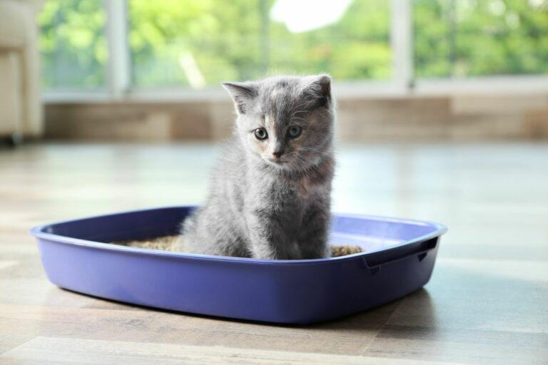 Pesek za mačke: 5 pomembnih vprašanj