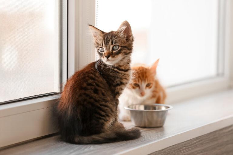 Hrana za mačke vseh starosti