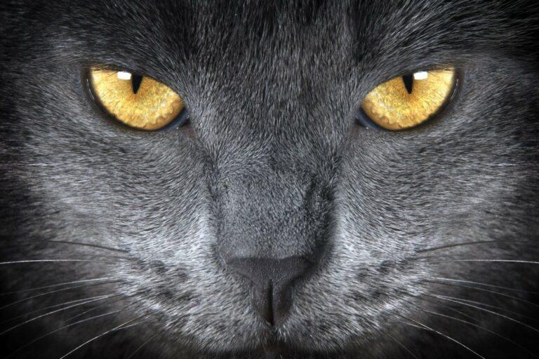 Kako vidijo mačke?