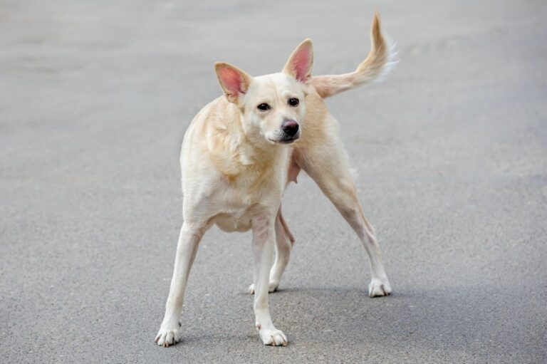 Izgubljen pes?