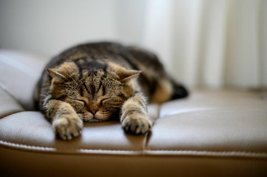 Mačka naš vzornik