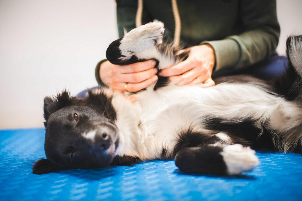 pasja masaža