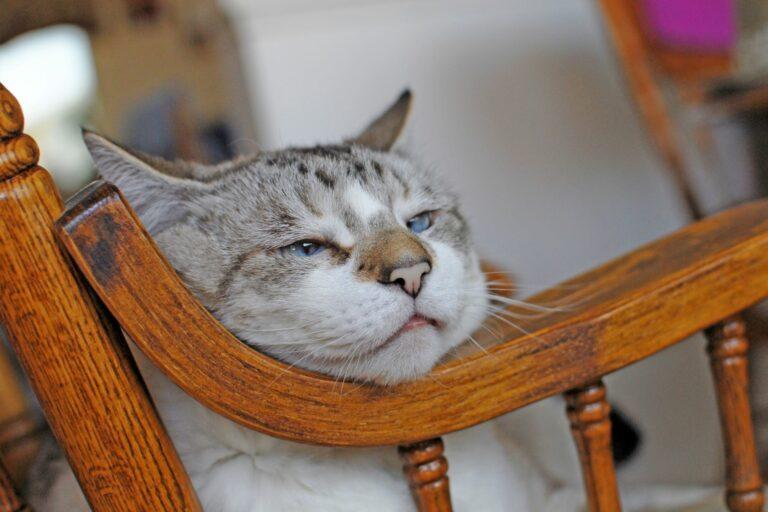 Starost mačke