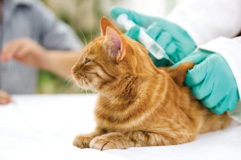 Cepljenje mačke