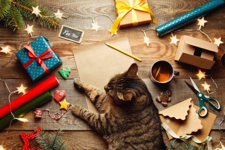 Adventni koledar za mačke
