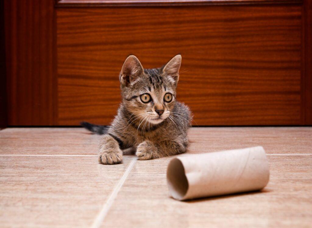 Igrače za mačke