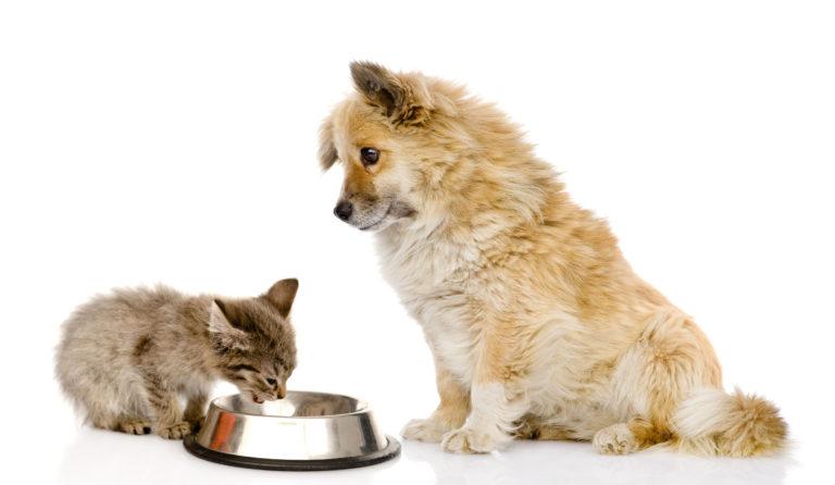 Je mačja hrana primerna za pse?