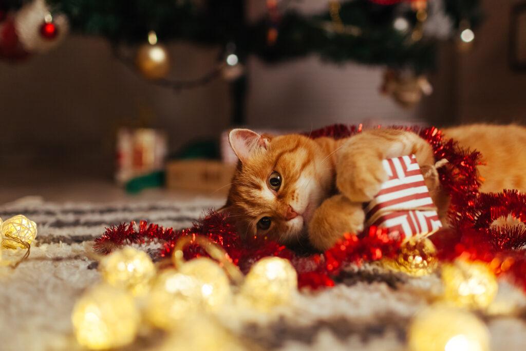 Božična darila za mačke