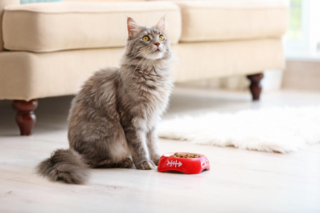 Izguba apetita pri mačkah