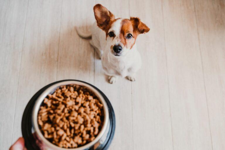 količina hrane za psa