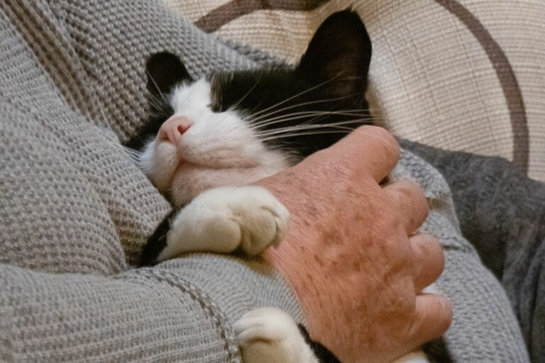 Terapevtska mačka