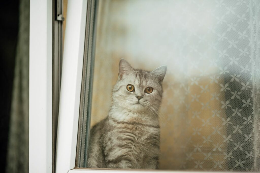Varnost mačke doma