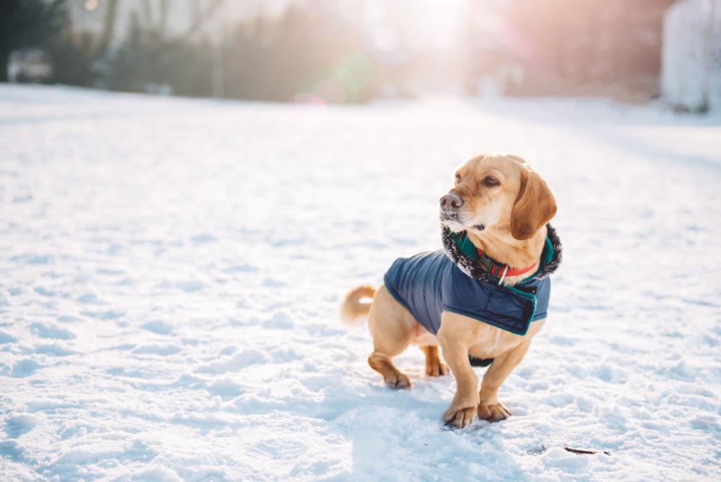 prehlad pri psih