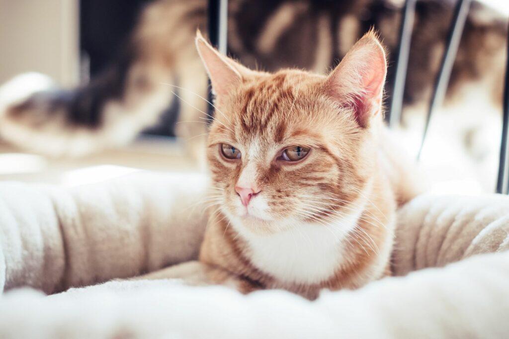 valentinovo za mačke