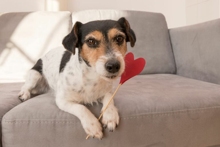 valentinovo za pse