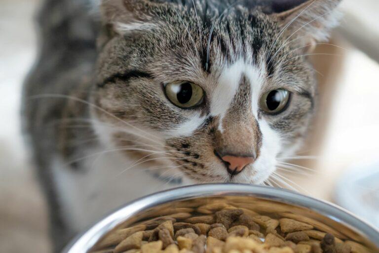 Kako določiti pravo količino hrane za svojo mačko