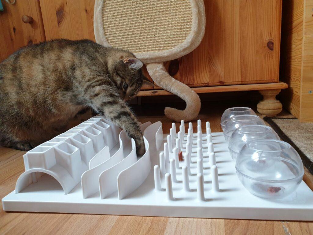 Šport za mačke