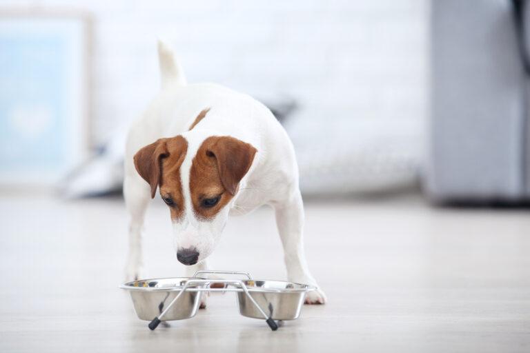 Sprememba hrane pri psih