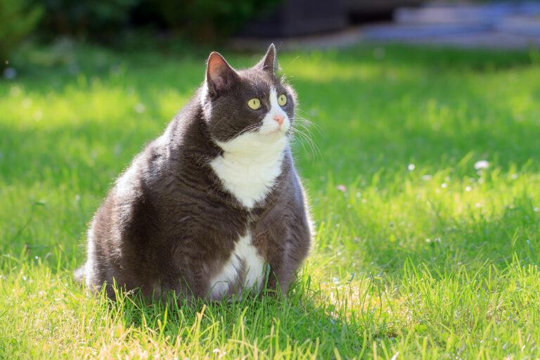 je moja mačka predebela