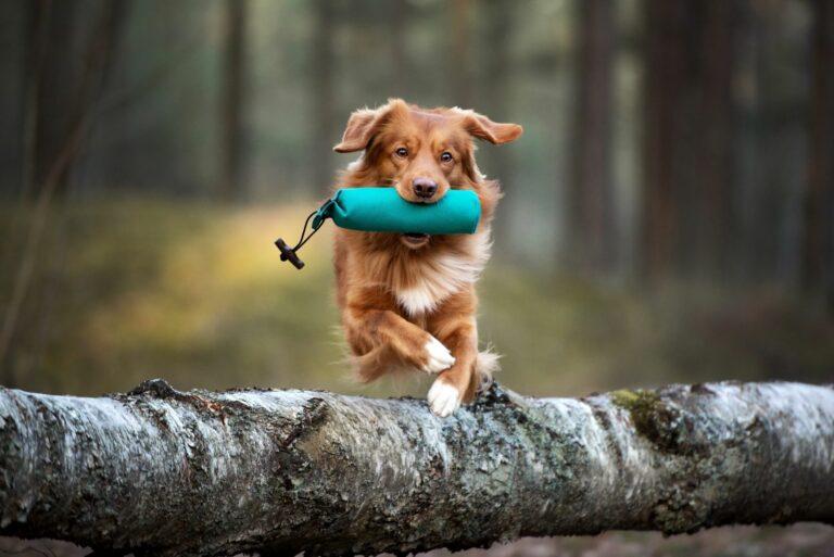 Fitnes za pse