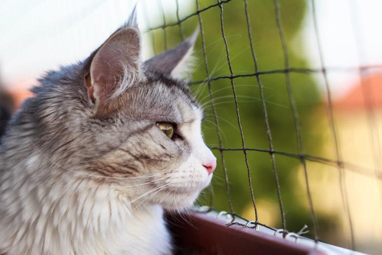 Balkonska mačja mreža