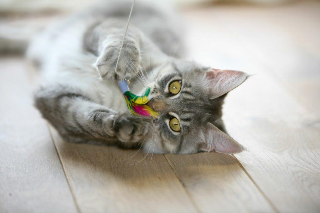 Hišna mačka na tleh se igra s palico za mačke