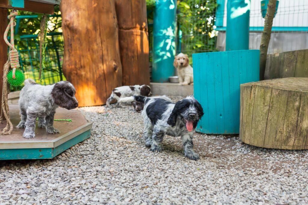 Socializacija pasjih mladičkov, psi na igrišču