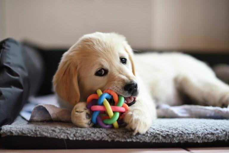 Socializacija pasjih mladičkov, pes na kavču