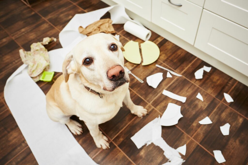 Pes sam doma razmetal koš